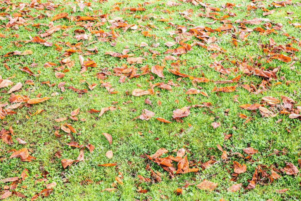 your lawn during the fall